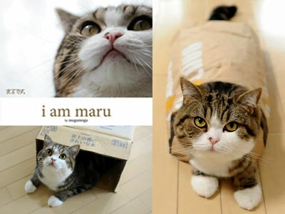 maru-the-cat-book